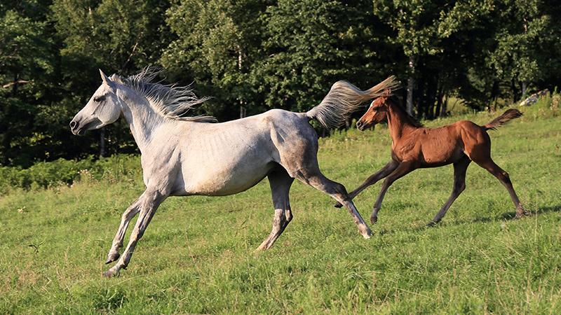 競馬に出てる馬は引退するとどこへ行くの?