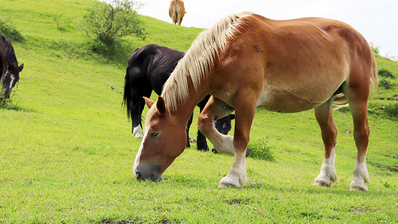 馬を題材にした名作マンガ・名作映画・名作ゲーム一覧
