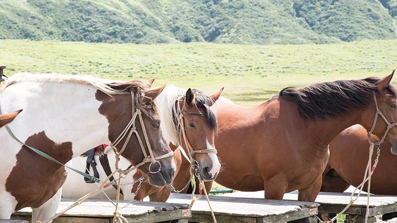 日本に暮らす、さまざまな馬たち